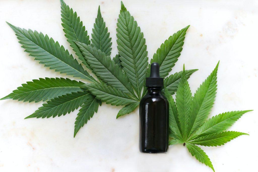 Hanfpflanze und ein Fläschen mit CBD-Öl